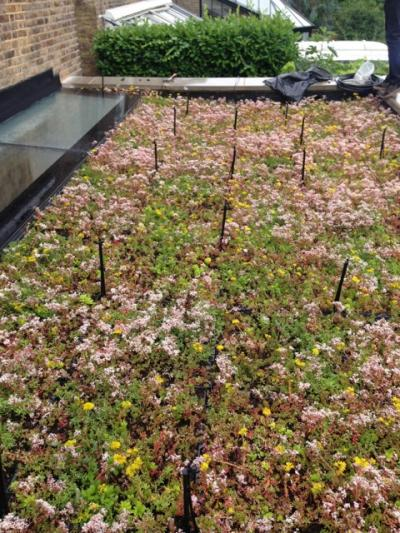 Green Flat Roof Advantages